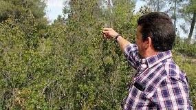 Foto de Potenciar la gestión de los montes puede ayudarnos a combatir situaciones como la del coronavirus