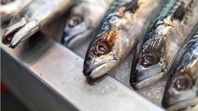 Foto de El sector pesquero, preocupado por el suministro de pescado a la población