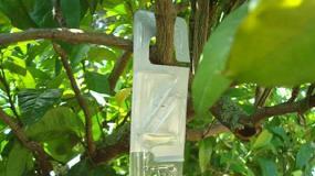 Foto de Autorización excepcional del dispositivo de control biotécnico de Massó para cítricos