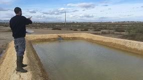 Foto de Cultivar almejas en campos de arroz salinizados del Delta del Ebro para evitar los daños del cangrejo azul