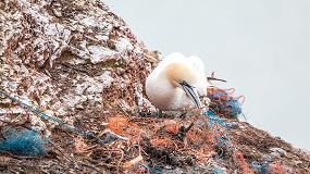 Foto de Seis projetos de prevenção e sensibilização para redução do lixo marinho financiados com um milhão de euros