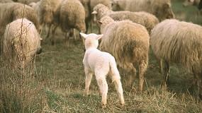 Foto de Ayudas de hasta 2.100 euros por explotación por la pérdida de ventas en ovino y caprino de carne
