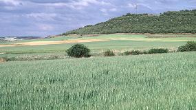 Foto de Los cultivos herbáceos pierden en España casi 400.000 hectáreas en cinco años