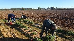 Foto de Las cooperativas de Extremadura cubren los más de 200 puestos de trabajo ofertados y reabrirá la contratación en mayo