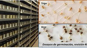 Foto de El banco de semillas del INIA examina la germinación de muestras tras 40 años de conservación