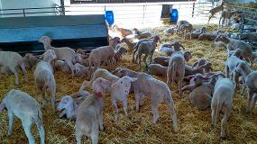 Foto de Los ganaderos de ovino y caprino recibirán ayudas máximas de 1.200 euros por el COVID-19