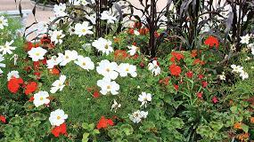 Foto de Falta de apoyo de la Comisión Europea al sector de flor y planta