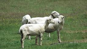 Foto de Las organizaciones agrarias consideran insuficientes las ayudas para el ovino y caprino