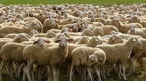 Foto de Una investigación refuerza el sistema inmune de las ovejas para las infecciones por lentivirus