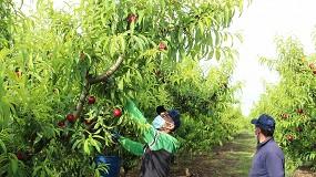 Foto de AEFA, con el apoyo de Cooperativas, Tragsa y el MAPA, dona mascarillas a trabajadores del campo