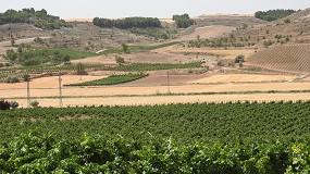 Foto de UPA pide al Gobierno un plan de apoyo al viñedo más ambicioso