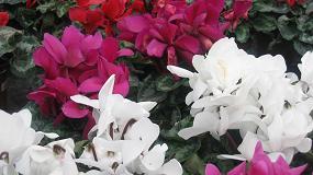 Foto de Hundimiento de la exportación de flores y plantas en marzo con una caída del 23% a causa de la COVID-19