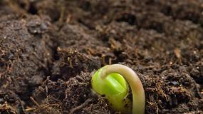 Foto de Actualización de la normativa técnica que regula la sanidad de plantas de vivero y semillas