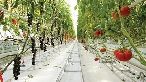 Foto de 'Tomate Vision', nuevo centro Syngenta para acelerar su innovación en el cultivo del tomate