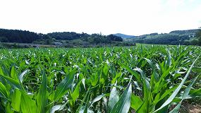 Foto de Profertil, el bioestimulante foliar que fortalece y aumenta el potencial productivo de los cultivos