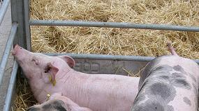 Foto de La cotización del concentrado para el cebo de cerdos baja un 7% en dos meses