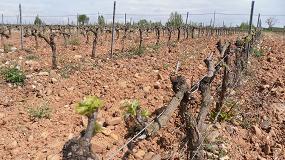 Foto de UPA Castilla y León recomienda a los viticultores negociar precios con las bodegas