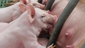 Foto de Aragón y Cataluña encabezan un censo porcino que sube un 1,4% anual