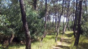 Foto de Que profissionais pretendemos para o setor florestal?