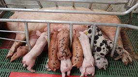 Foto de Apoyo de Asaja a la norma que simplifica la burocracia de explotaciones porcinas en Castilla y León
