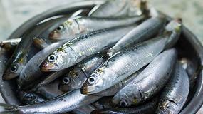 Foto de Más de la mitad de las sardinas y anchoas del Mediterráneo occidental tienen microplásticos en los intestinos