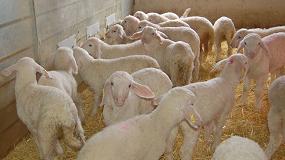 Foto de El inicio de la primavera marca una debacle en la producción de carne ovina con una caída del 13,8%