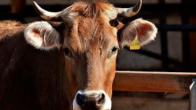 Foto de Nace la red transpirenaica Innotub para combatir la tuberculosis animal