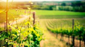 Foto de El sector vitivinícola cuenta para esta nueva campaña con los contratos homologados de compra/venta de uva y vino