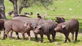 Foto de Finaliza el plazo de alegaciones para alargar las ayudas al porcino ibérico