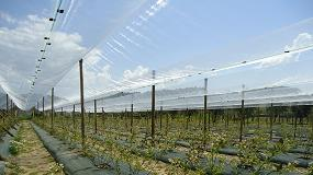 Foto de Proteção de culturas em campo aberto: proteção de Frutos Vermelhos (ficha de produto)