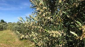 Foto de La innovación en la olivicultura fija la población rural