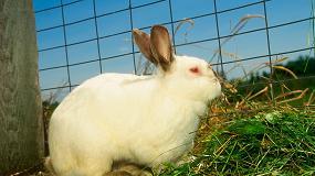 Foto de Francia, España e Italia abarcan más del 85% de la producción europea de carne de conejo