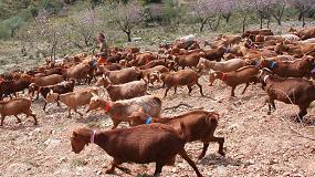 Foto de Estudio de Cabrandalucía sobre la optimización de ganaderías y su influencia en la huella de carbono