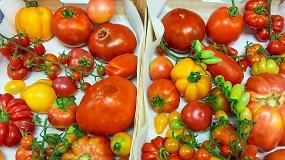Foto de Un proyecto del CSIC busca desarrollar tomates más resistentes y con más sabor