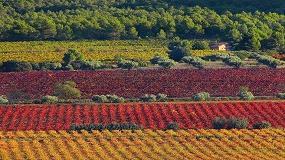 Foto de Las DO valoran positivamente la posición hispanofrancesa en defensa de la continuidad del sistema de autorización de plantaciones de viñedo