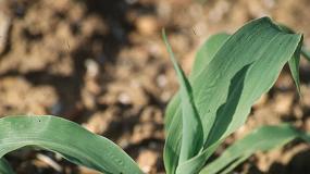 Foto de El MAPA avanza en la mejora de la fertilización de los cultivos y la reducción del impacto ambiental