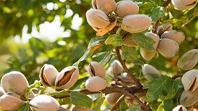 Foto de El sector de frutos secos hace balance de la campaña y prevé un aumento de la producción en la 20/21