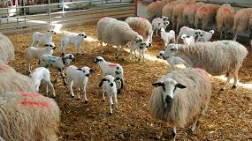 Foto de Los corderos ligeros en España son un 14,5% más caros que la media europea