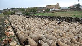 Foto de Valores ambientales y de bienestar animal como apoyo a la ganadería extensiva ovina