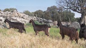 Foto de La gestión del uso compartido de recursos con la fauna silvestre para controlar la tuberculosis