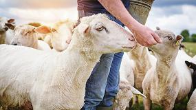 Foto de Jornada online para veterinarios sobre bienestar animal en ganadería