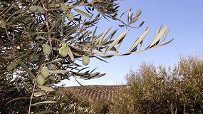 Foto de Syngenta pone a disposición de los olivareros su gama de producto para los tratamientos herbicidas y nutricionales del otoño
