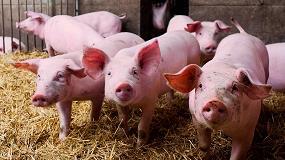 Foto de Piden más inversión para las medidas preventivas por la Peste Porcina Africana