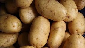 Foto de UPA alerta sobre el desplome del precio en origen de la patata en Castilla y León