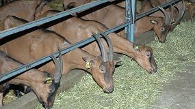 Foto de El concentrado para cabras de leche se encarece un 5,1% en el último mes