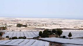 Foto de Los hitos de innovación de la horticultura almeriense (II): la opinión del sector