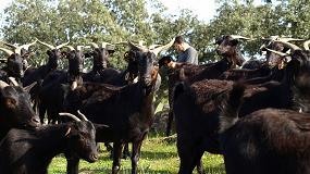 Foto de Financiación para la bioseguridad de las explotaciones caprinas extremeñas