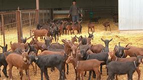 Foto de El precio de los cabritos lechales en Andalucía se modera con una subida anual del 0,2%