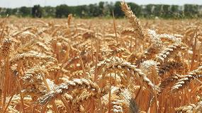 Foto de Una parte del sector agrario, en contra de comercializar los nuevos OMG de edición genética sin protocolos de vigilancia