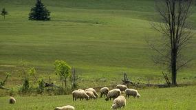 Foto de Una vacunación persistente contra 'Haemonchus contortus' proporciona inmunidad a los corderos